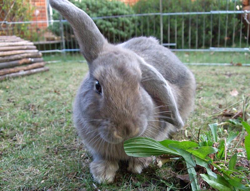 farm animals city urban breeds rabbits