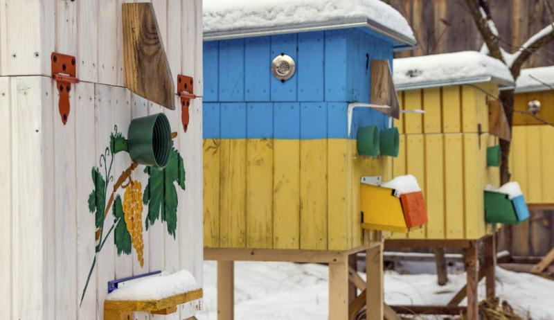 winter beehives