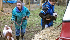 disaster prep farming livestock