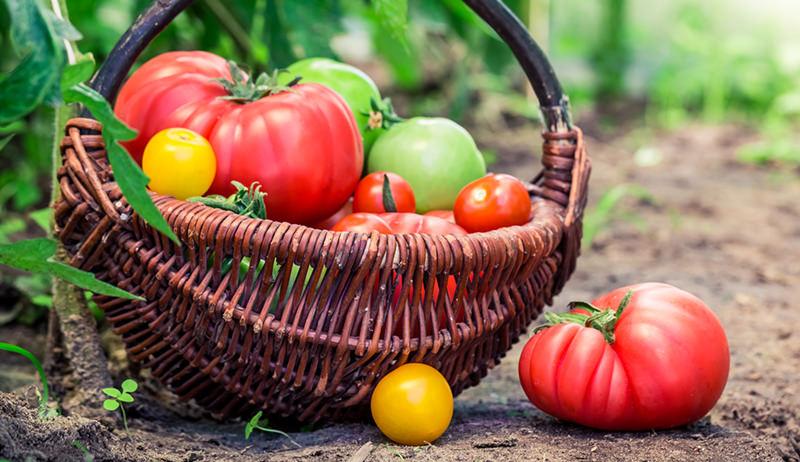 garden fight hunger