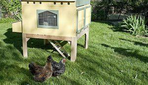 chicken coops urban