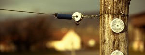 Maintain electric fence