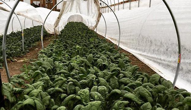 Green Wagon Farm