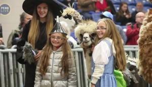 alpaca in costume