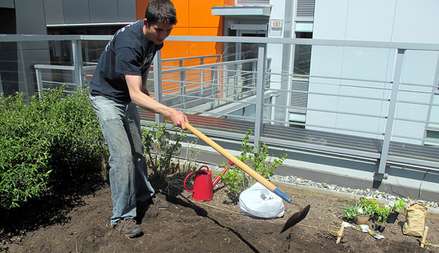 gardening, hoeing