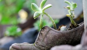upcycled garden, garden shoe, shoe garden