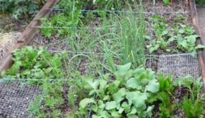crops, garden
