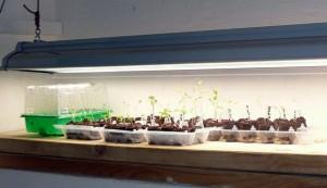 seeds, seeds starting