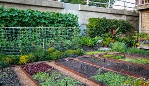 urban farm hurdles
