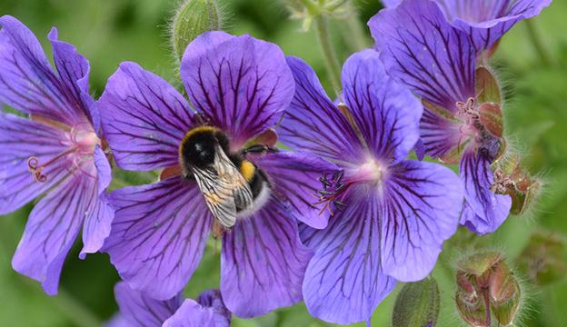 bee, flower, pollinator