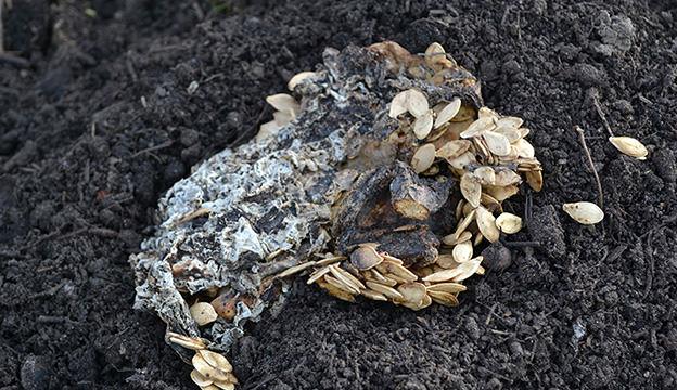 self-sowing seeds