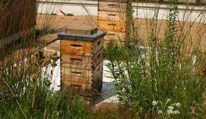 bees hives split beehive colony
