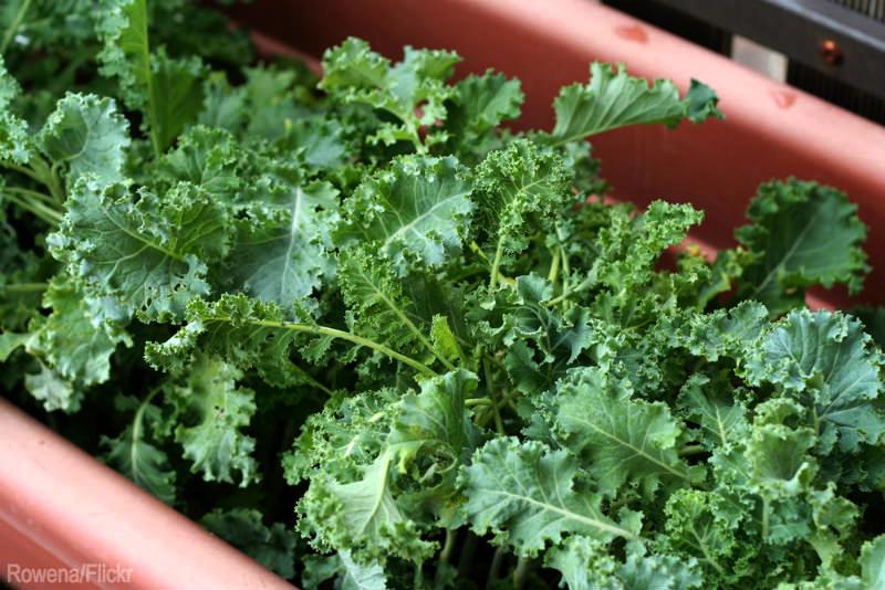 indoor gardening edibles winter