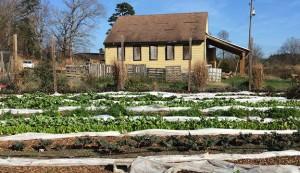 Hub Farm