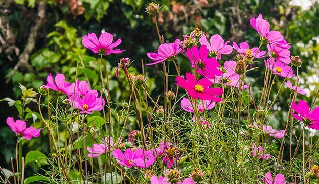 Thangaraj Kumaravel/Flickr
