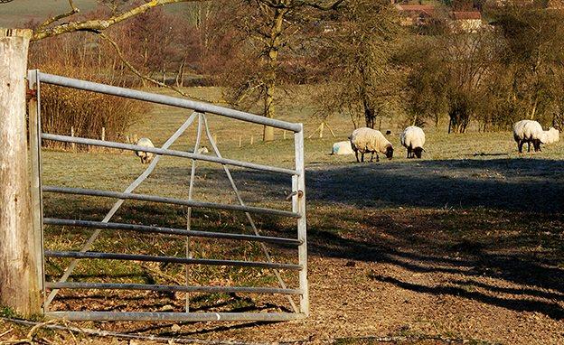 farm gate, fencing