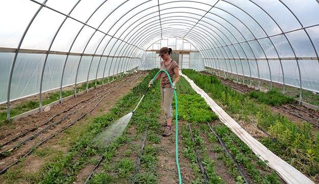 garden, watering, greenhouse