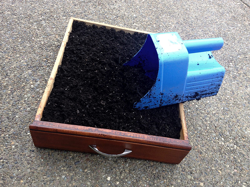 fill box with soil