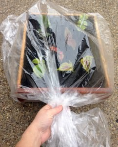 wrap propagation box in bag