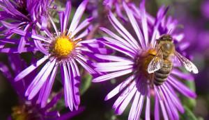beekeepers bees honeybees seasons