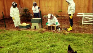 beekeepers with chicken watching