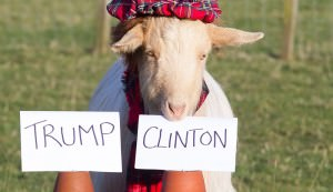 psychic goat predicts U.S. President