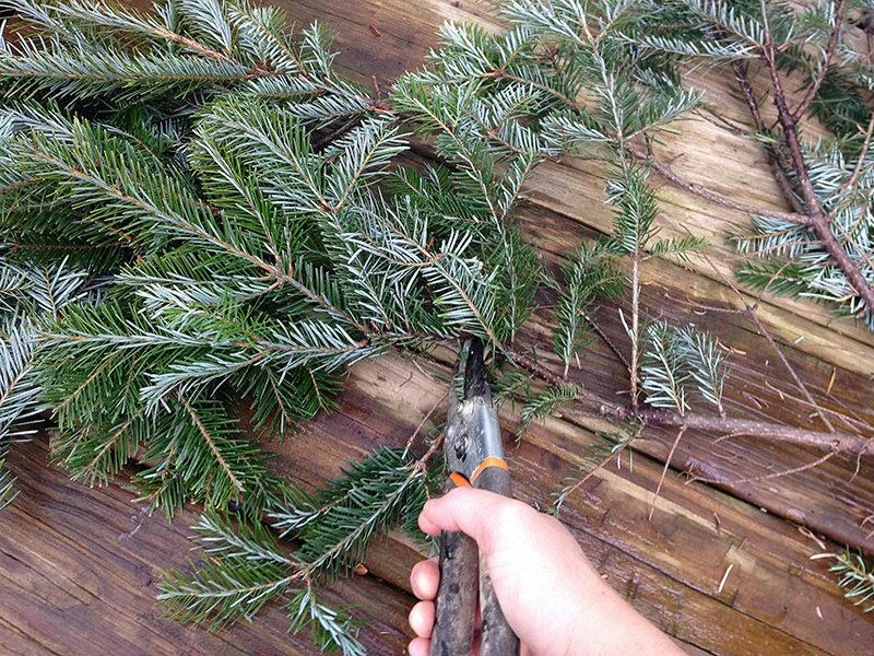cut evergreens