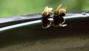 worker bees dearth