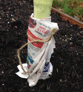 blanch leeks with newspaper