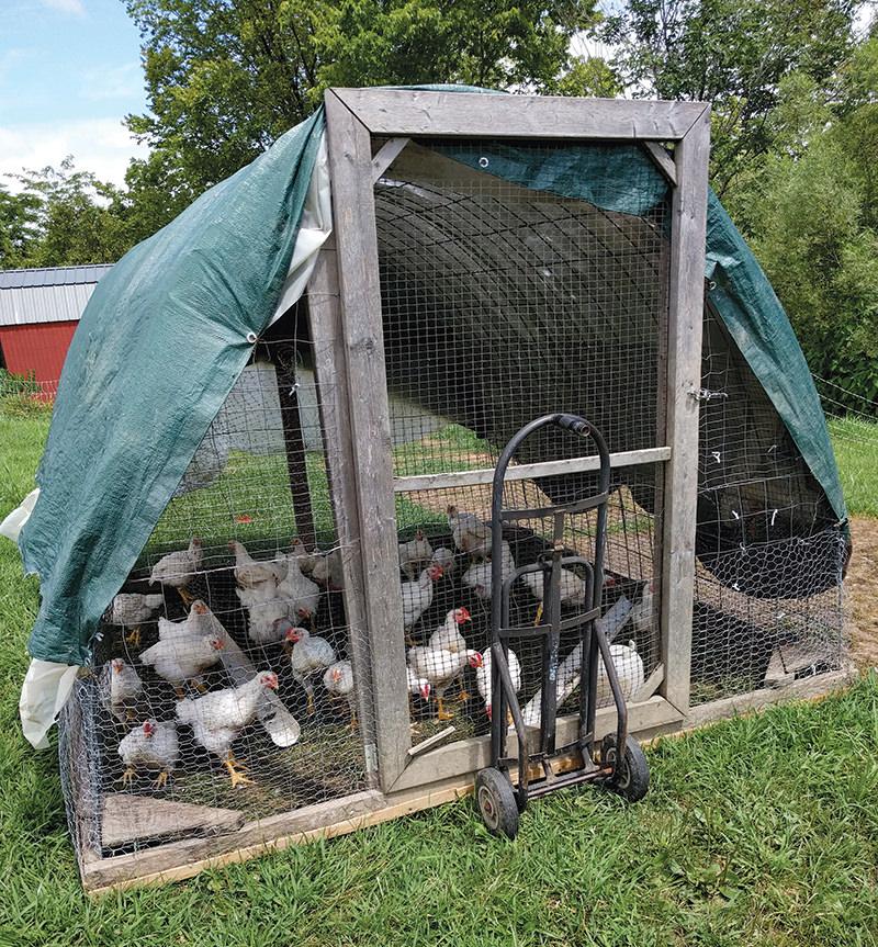 farm hack hacks chickens