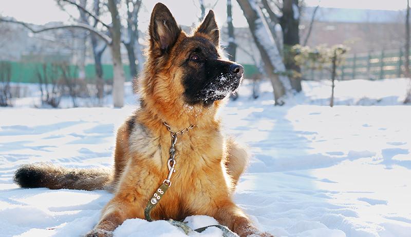 farm dog snow