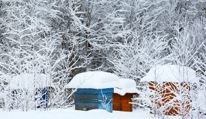 beehives in winter snow
