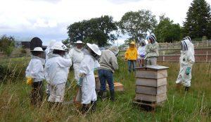 bee club beekeepers mentors