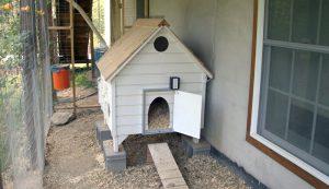 chicken coop with automatic door