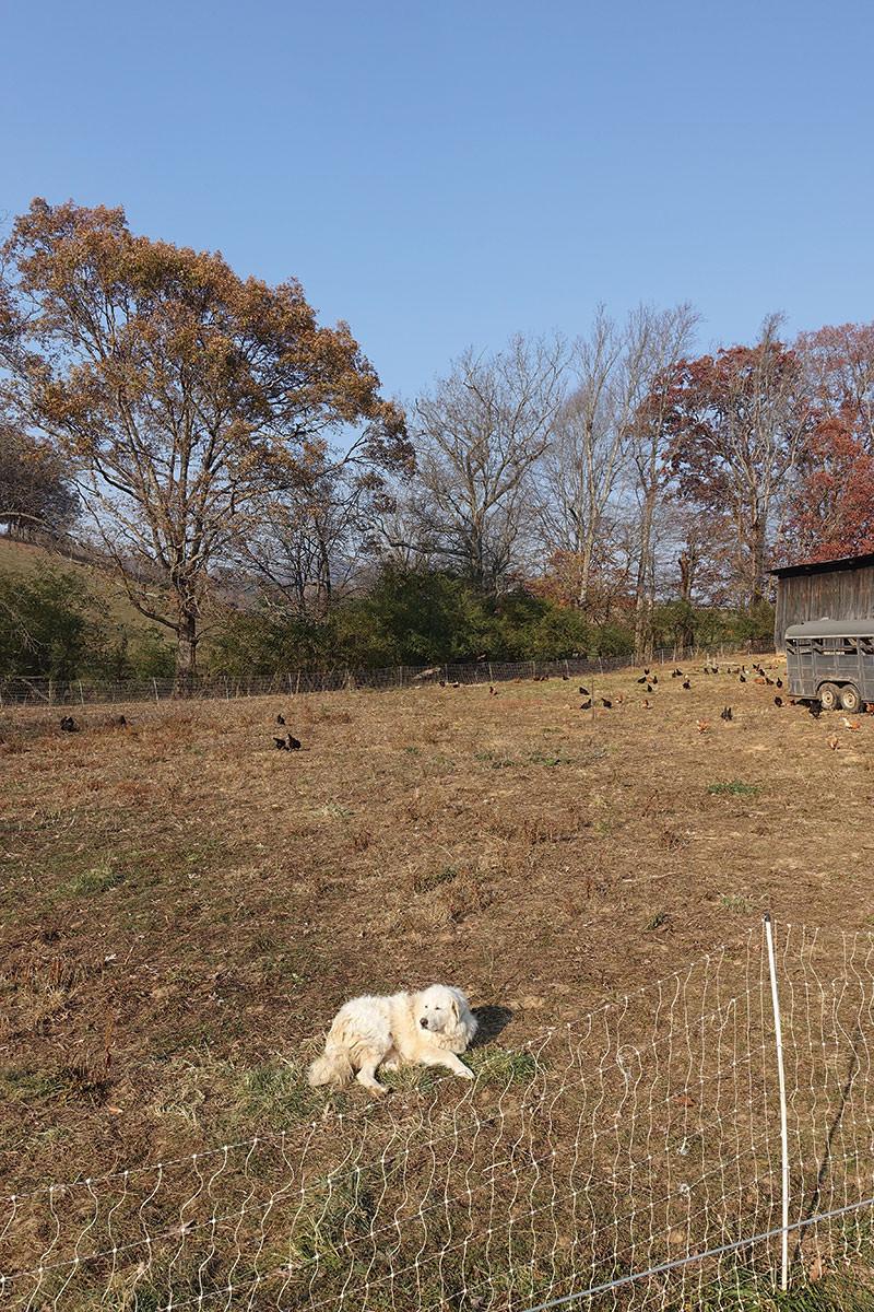 Dry Ridge Farm