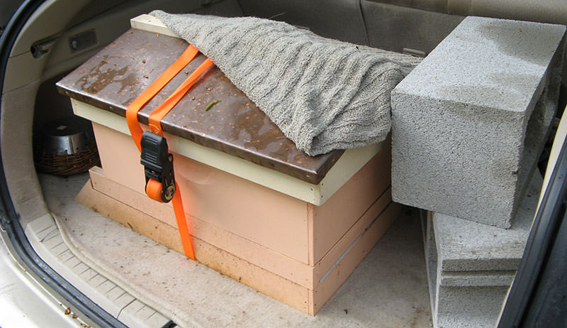 move a hive bees beekeeping