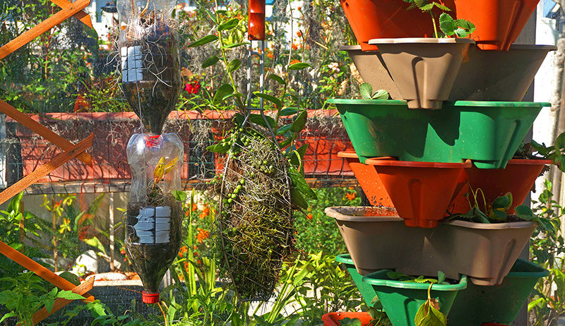 vertical garden with vegetables