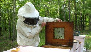 beekeeping attire bee suit