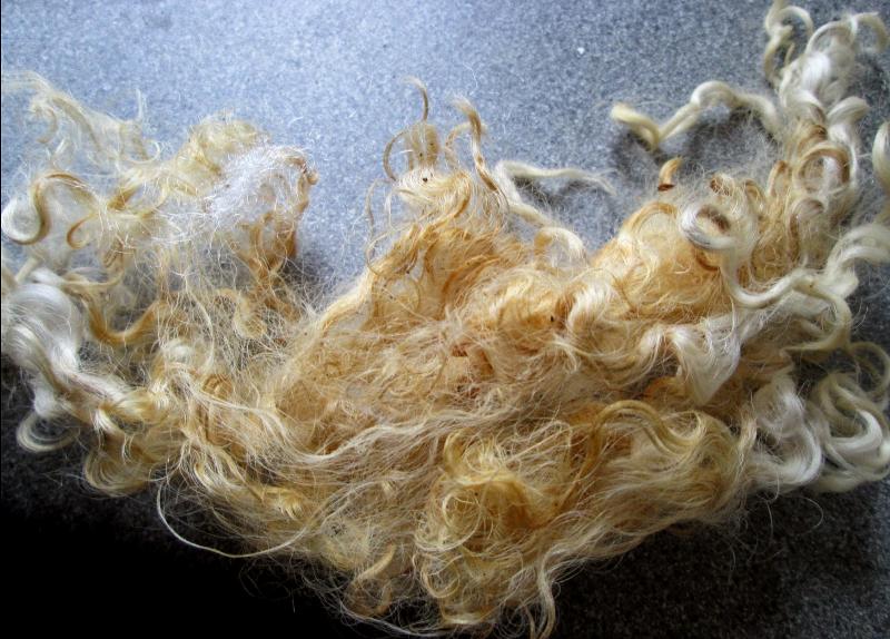 lanolin-stained sheep's fleece