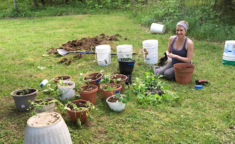 planting cucurbits