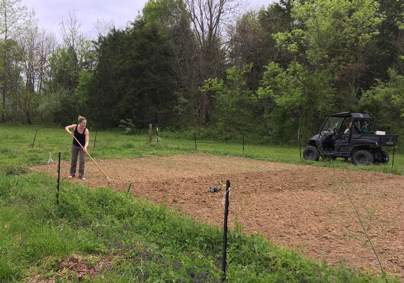 seeding cover crop