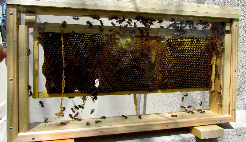 observation hives bees attract customers