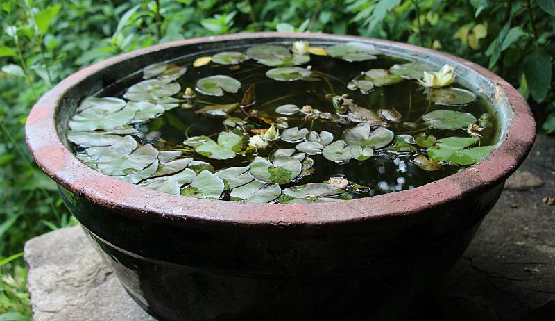 patio water garden