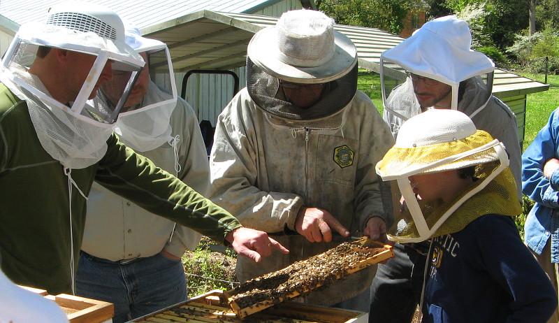 bees beekeeping mentors