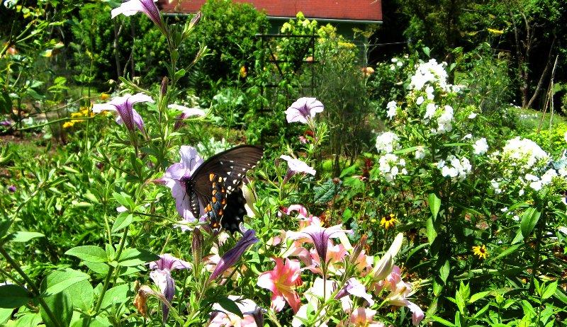 pollinators plants flowers garden