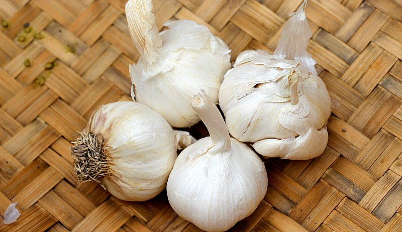 homegrown garlic harvest dry
