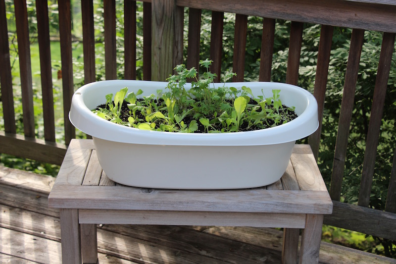 Jessica Walliser upcycled garden container