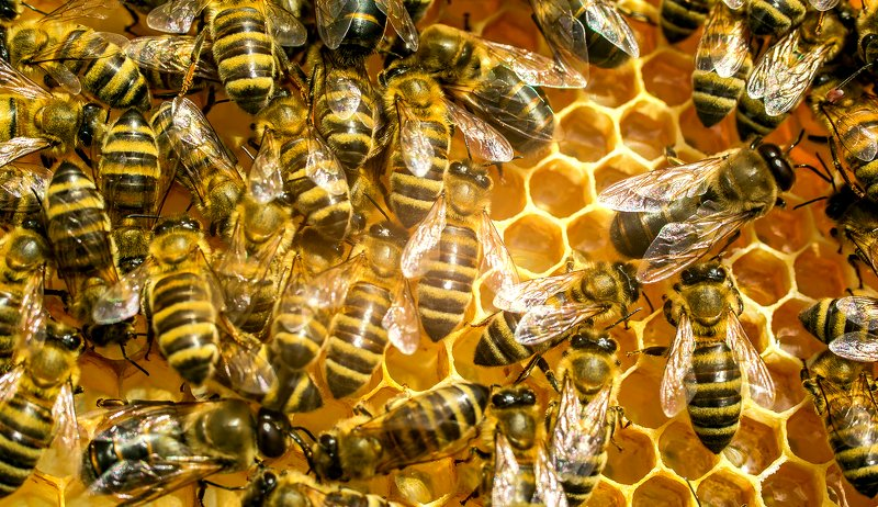 feeding bees winter