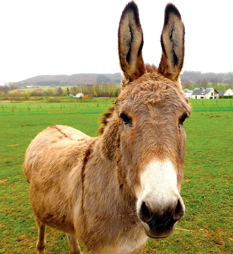 donkey health