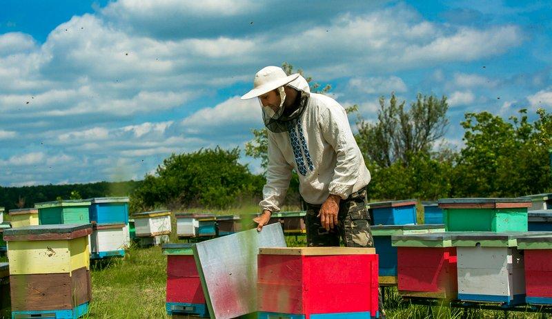 harvest honey bees